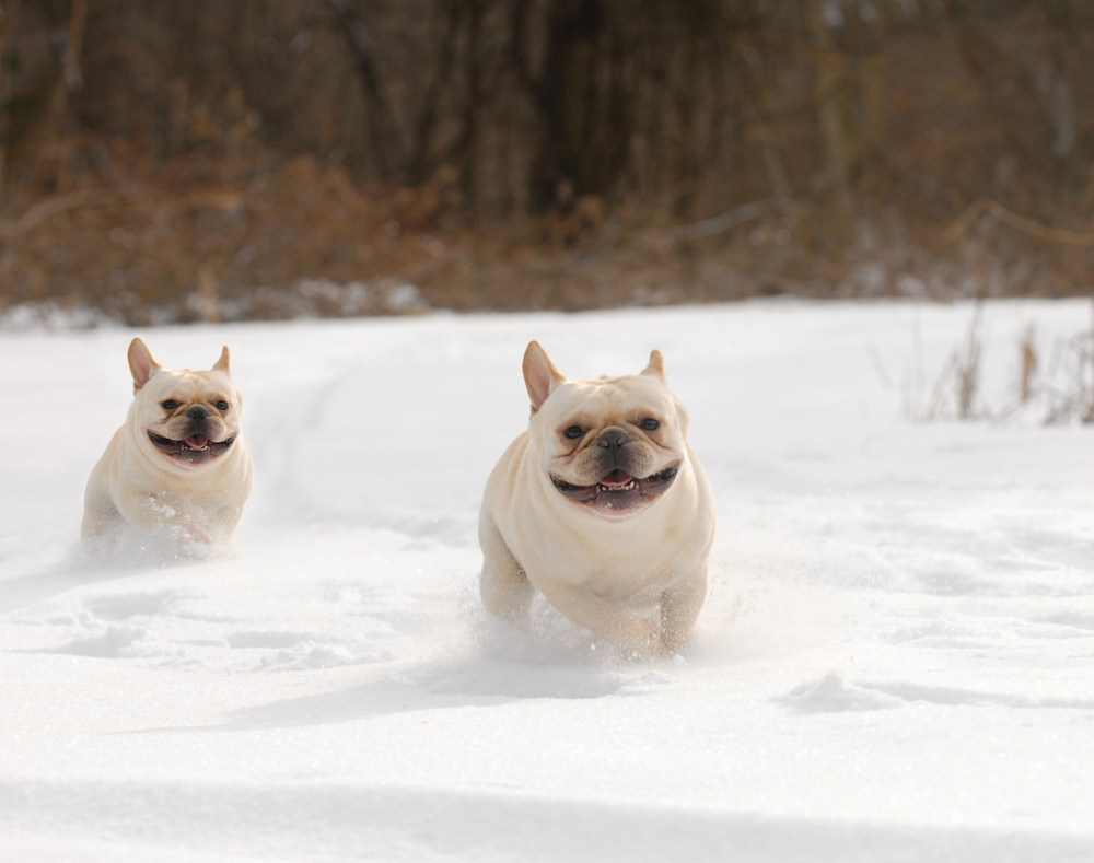Winter Weather Safety Tips for Pets