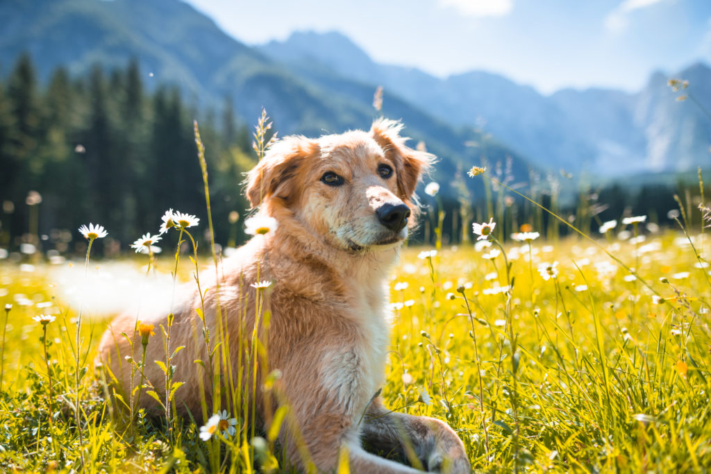 Virginia Veterinary Center's Dermatology and Allergy Services
