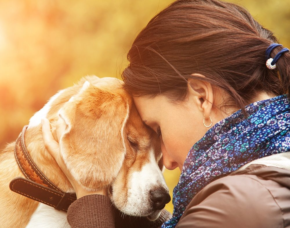 What to Expect If Your Pet Has Been Diagnosed With Cancer
