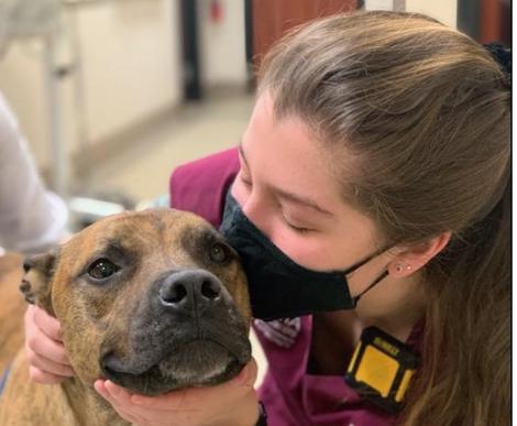 Veterinary Technician - Virginia Veterinary Centers